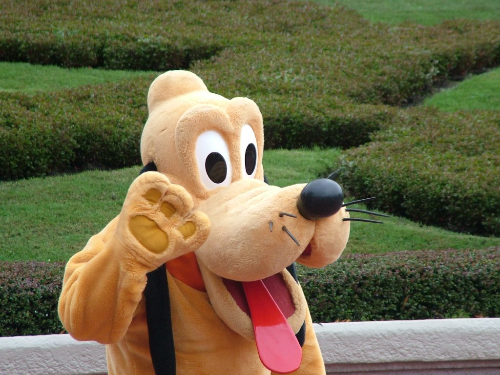 A CM (cast member) is in a Pluto costume at Disney park or resort.